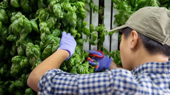 Agricoltura Urbana: una storia ultramillenaria